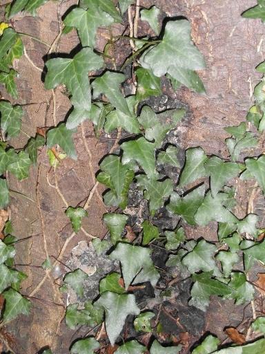 hidden-cinder-fungus