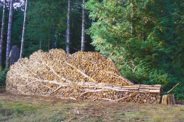 Fallen tree?