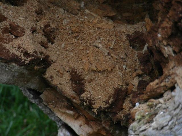 Frass (Invertebrate debris)