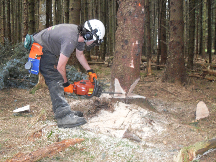 Fell medium trees