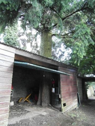 tree-in-my-garage